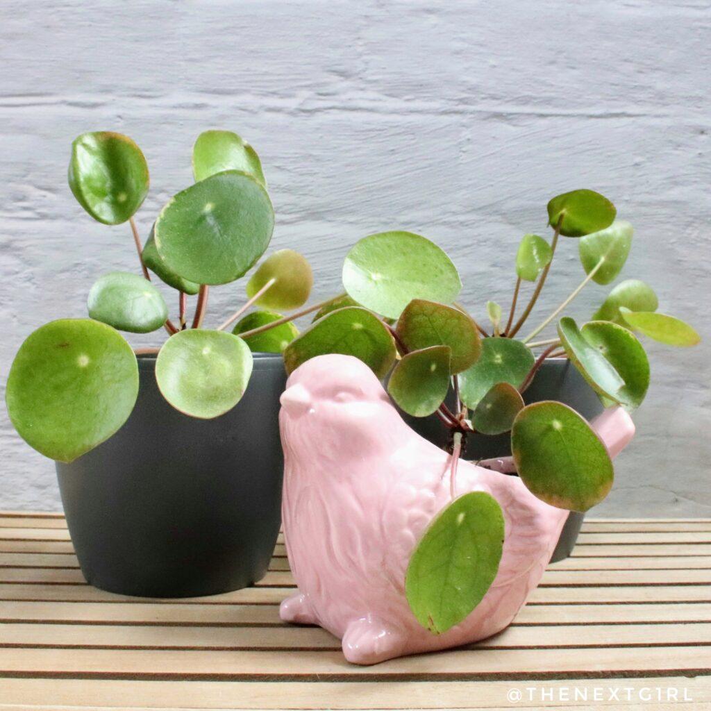 Plantjes zijn altijd leuk als cadeautje