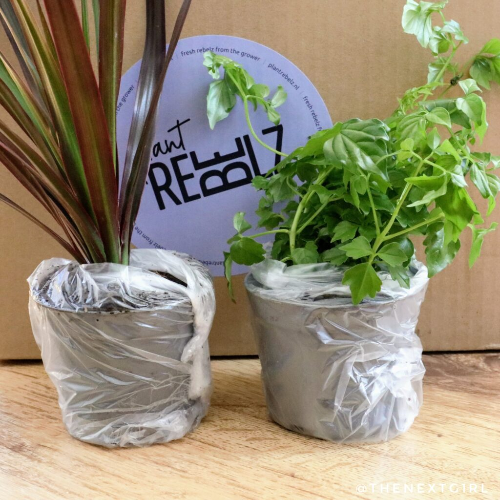 Plantrebelz goed verpakte stekjes