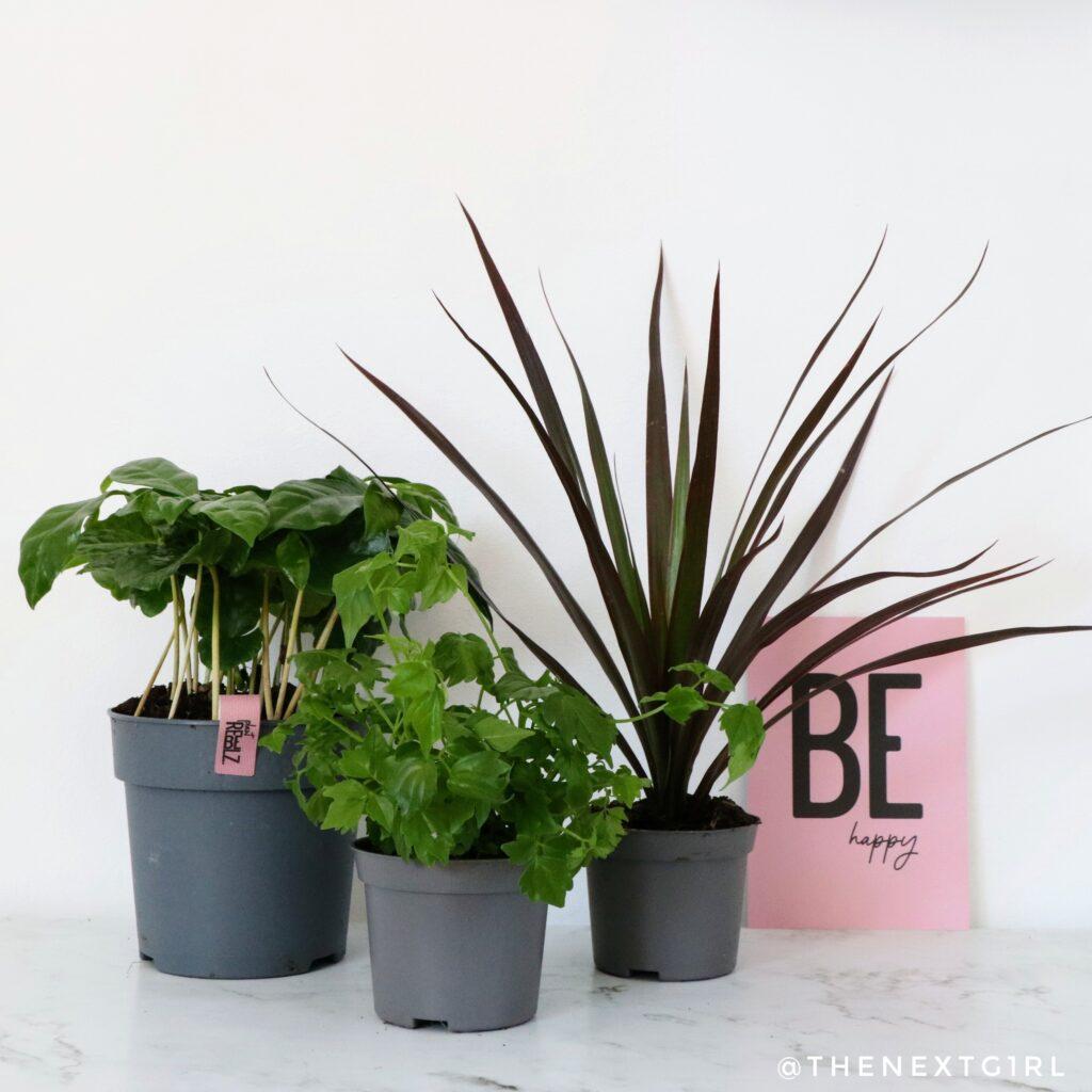 Plant en stekjes van Plant Rebelz