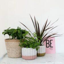 Plantparty mbv plantrebels planten en stekjes