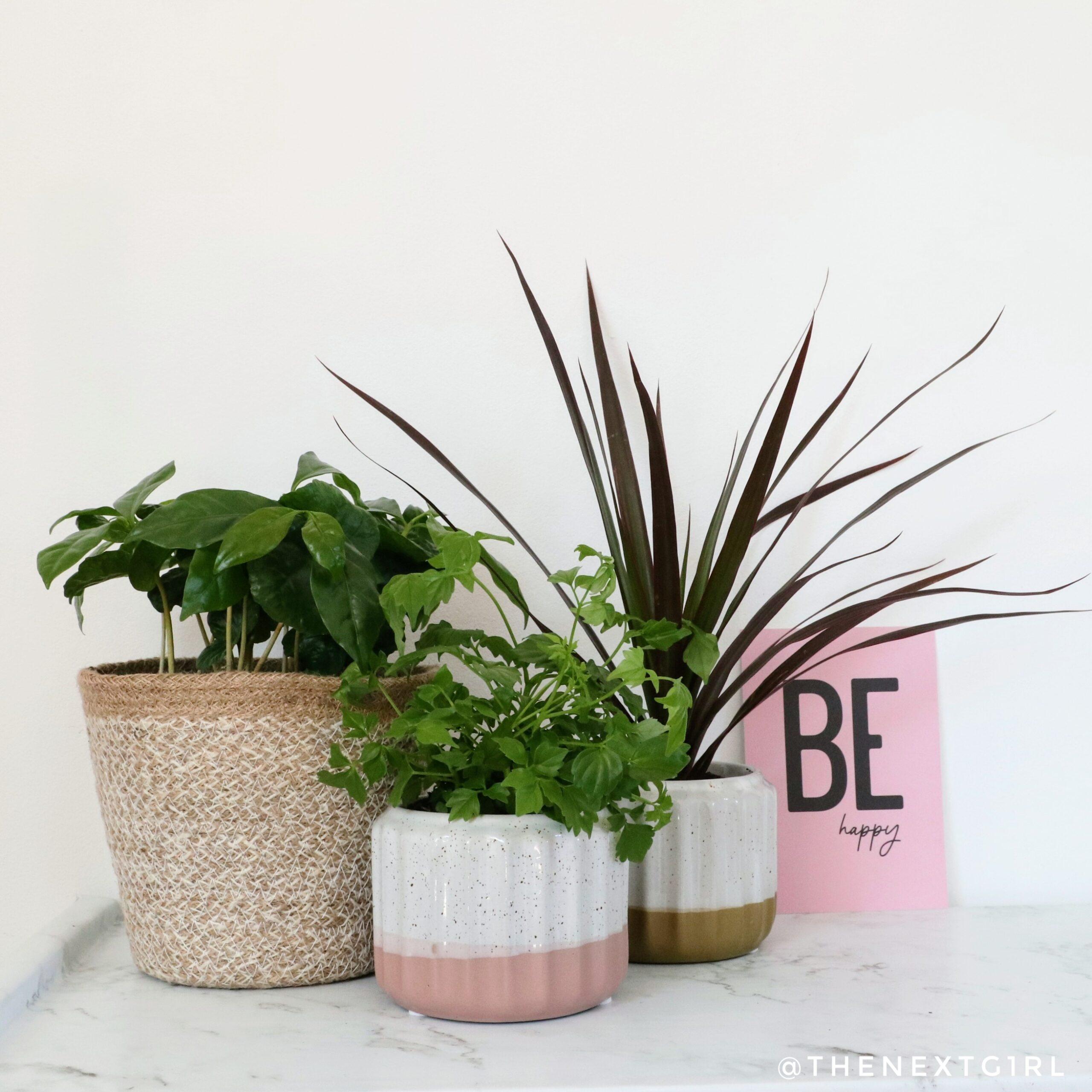 Een groene (werk)omgeving door Plant Rebelz